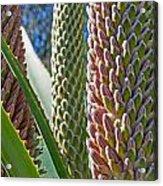 Succulents IIi Acrylic Print