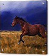 Galloping Horse Painting Acrylic Print