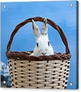 sugar the easter bunny 4 - A curious and cute white rabbit in a hand basket  Acrylic Print