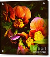 Sultry Nights - Flower Photography Acrylic Print