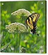 Sultry Summer Day Acrylic Print