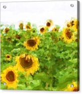 Sultry Sunflowers Acrylic Print