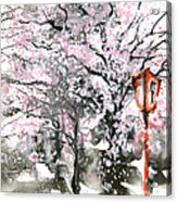 Sumie No.3 Cherry Blossoms Acrylic Print