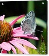Summer Azure Acrylic Print