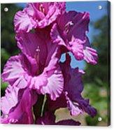 Summer Beauties Acrylic Print