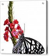 Delicate Beauty Acrylic Print