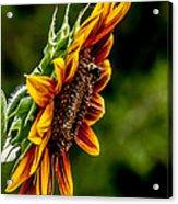 Summer Beauty Acrylic Print