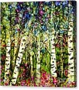 Summer Birch Acrylic Print
