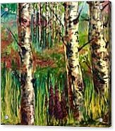 Summer Birch Acrylic Print
