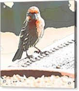Summer Bird Acrylic Print by Artist and Photographer Laura Wrede