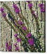 Summer Bloom 2 Acrylic Print