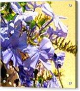 Summer Blooms Acrylic Print