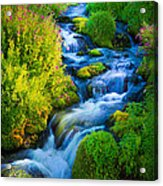 Summer Cascade Acrylic Print