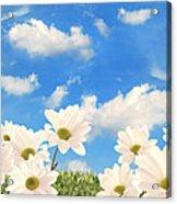 Summer Daisies Acrylic Print by Amanda Elwell