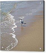 Summer Day Of A Gull 2 Acrylic Print