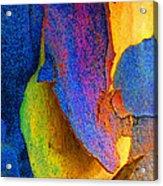 Summer Eucalypt Abstract 11 Acrylic Print