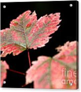 Summer Fall Acrylic Print