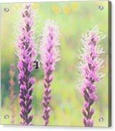Summer Flowers Of The Blue Ridge Parkway II Acrylic Print