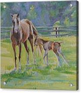 Summer Foal Acrylic Print