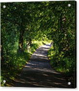Summer Forest Road Acrylic Print