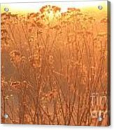 Summer Glow Acrylic Print