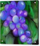 Summer Grape Acrylic Print