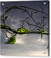Summer Green Acrylic Print