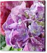 Summer Hydrangeas With Painted Effect Acrylic Print