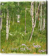 Summer In The Colorado Mountains Acrylic Print