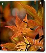 Summer Japanese Maple - 3 Acrylic Print