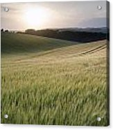 Summer Landscape Image Of Wheat Field At Sunset With Beautiful L Acrylic Print