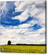 Summer Landscape With Cornfield Blue Sky And Clouds On A Warm Summer Day Acrylic Print
