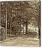 Summer Lane Sepia Acrylic Print