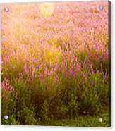 Summer Light Acrylic Print