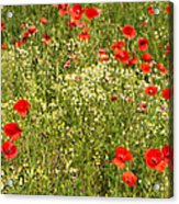 Summer Meadow Background Acrylic Print