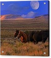 Summer Moon  Acrylic Print by Jeanne  Bencich-Nations