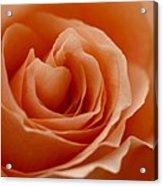 Summer Peach Acrylic Print