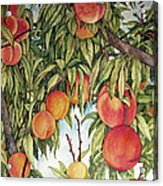 Summer Peaches Acrylic Print by Helen Klebesadel