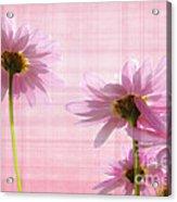 Summer Pinks Acrylic Print