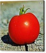 Summer Red Tomato Acrylic Print