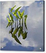 Summer Reflections Acrylic Print