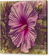 Summer Reward Acrylic Print