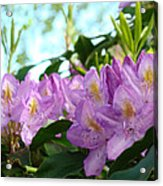Summer Rhodies Flowers Purple Floral Art Prints Acrylic Print