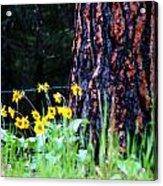 Summer Spirit Acrylic Print