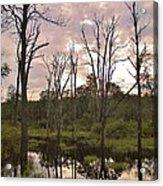 Summer Swamp  Acrylic Print