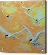 Summer Terns Acrylic Print