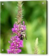 Summer Time And The Feeding Is Easy Acrylic Print
