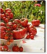 Summer Tomatoes Acrylic Print