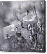 summer whipsers IIII Acrylic Print