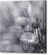 Summer Whispers Iv Acrylic Print by Priska Wettstein
